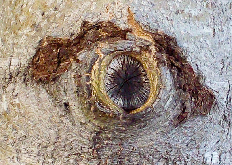 Trees-have-eyes